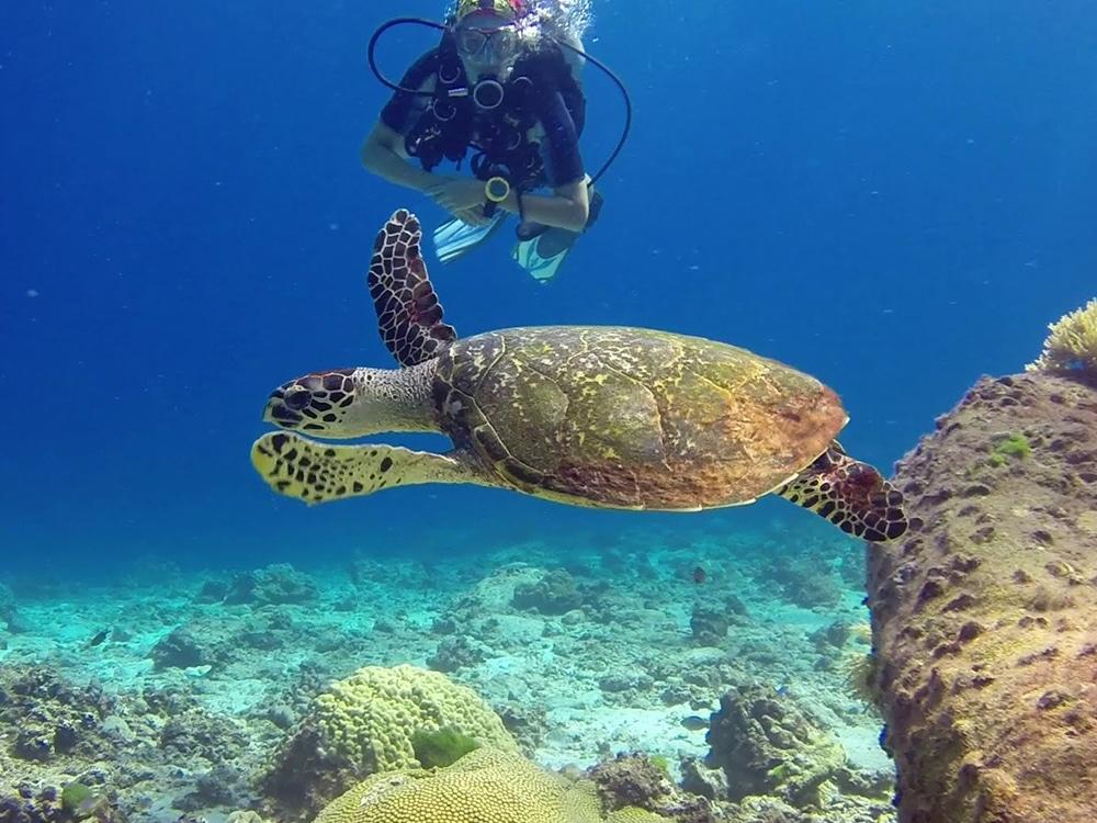 ラチャ島 ダイビング