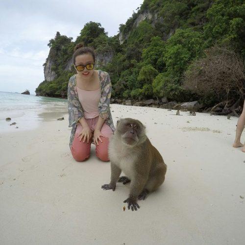 サルが多数いるビーチ