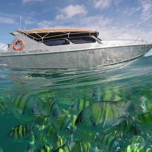 チャータースピードボート ラチャノイ島&ラチャヤイ島