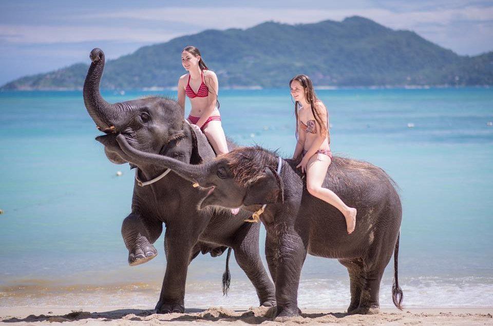 プーケットで象乗り体験!象を見て、乗って、ふれあおう!