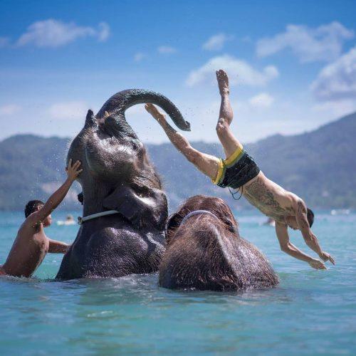 タイガーキングダム+子象と水浴び体験