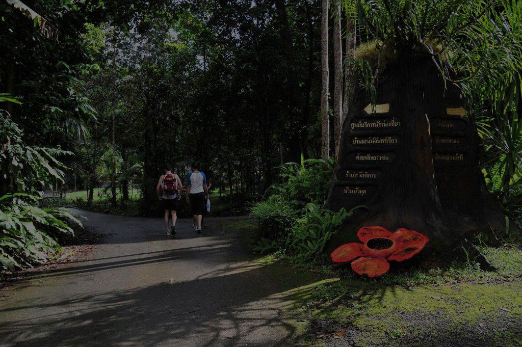 カオソック 国立公園 ツアー カオラック発