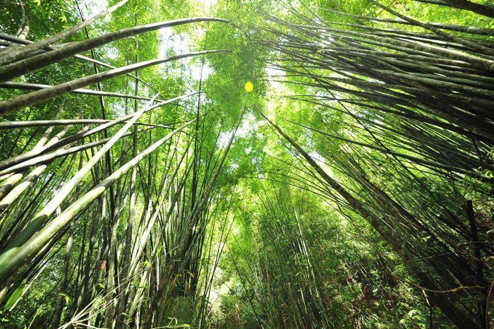 カオソック・ジャングル・ディスカバリー(1泊2日)