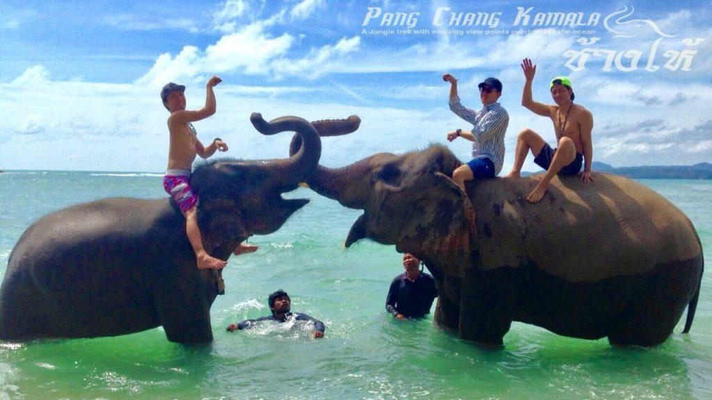 プーケット 象乗り 海