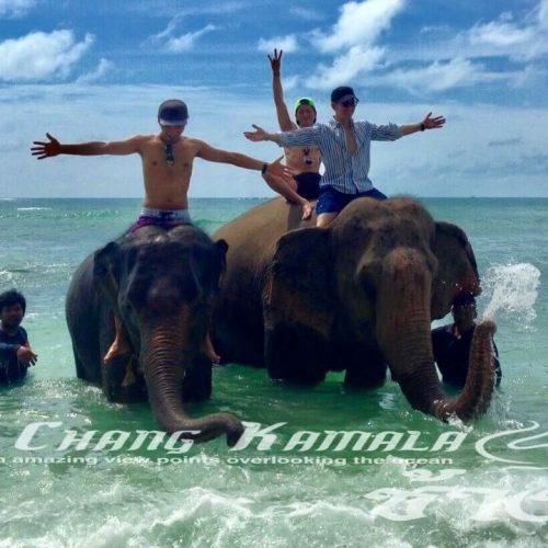 象乗り&象と水浴び