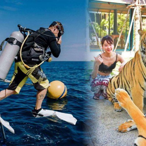 ラチャヤイ島体験ダイビング+タイガーパーク プーケット