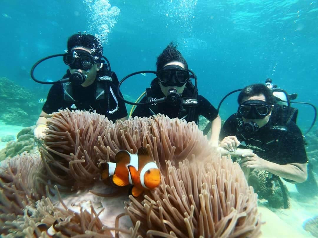 マイトン島 ダイビング